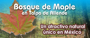 Bosque de Maple en Talpa
